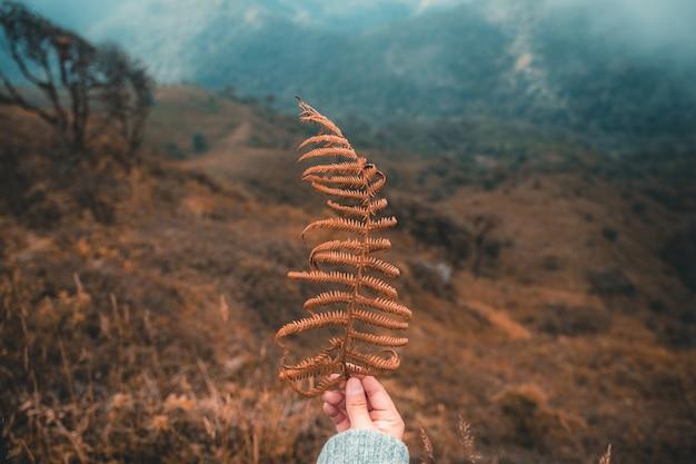 Mensen die blad op berg met mist houden