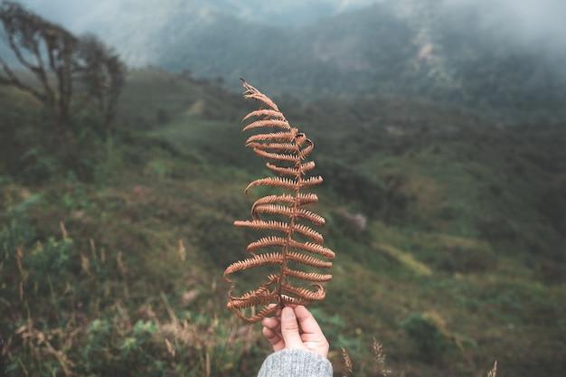 Mensen die blad op berg met mist houden Premium Foto
