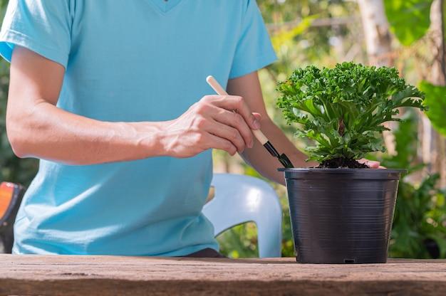 Mensen die bomen in potten planten concept van liefde planten houden van milieu