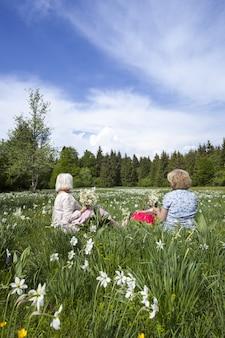 Mensen die narcissenbloemen plukken in het voorjaar in cauvery, frankrijk