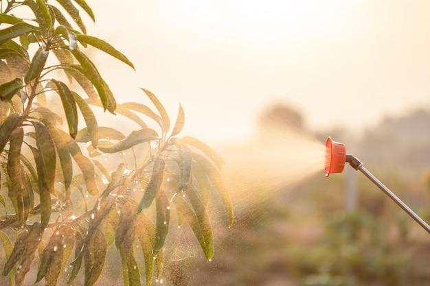 Mensen die water of meststof bespuiten aan jonge boom in tuin