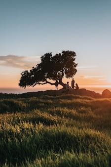 Mensen in de buurt van de boom aan de kust tijdens de zonsondergang