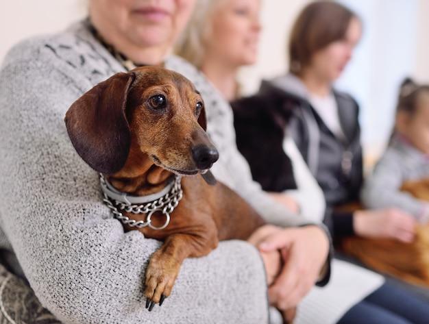 Mensen met hun huisdieren wachten op een medisch onderzoek in de dierenkliniek. diergezondheid