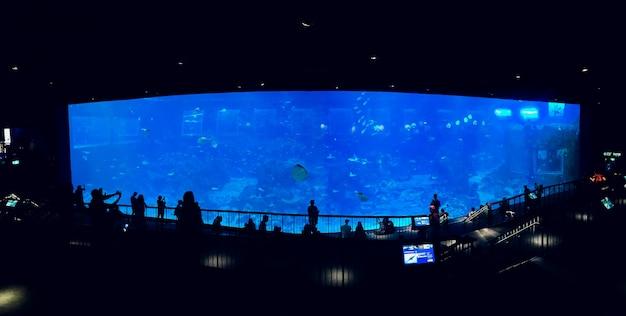Mensen observeren vissen in het aquarium