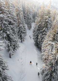 Mensen skiën in een besneeuwd bos