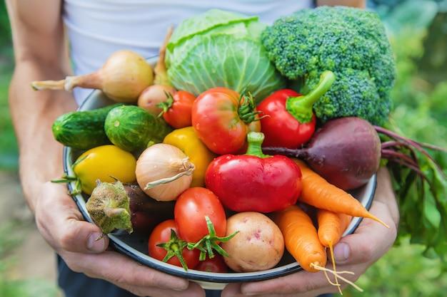 Mensenlandbouwer met eigengemaakte groenten in zijn handen.
