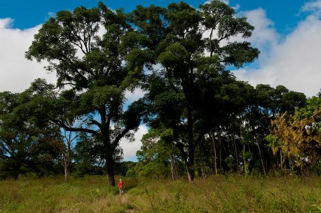 Mensentrekking in bos, santa cruz island, de eilanden van de galapagos, ecuador