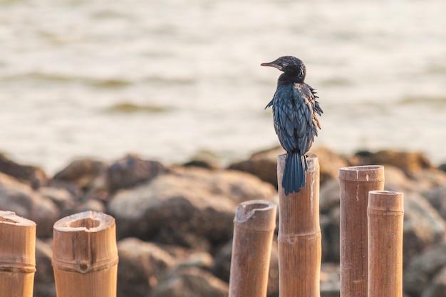 Merel zittend op een houten stok in de kust in mueang samut sakhon district thailand