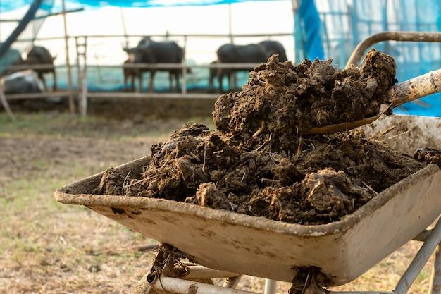 Mest of koeienmest voor teelt en landbouw.