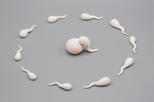Met de hand gemaakt polymeerklei-figuur van menselijk sperma impregneer een vruchtbaar menselijk ei