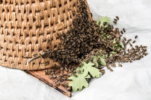Met de hand gemaakte oude strawe bijenkorf om bij in aard te vangen