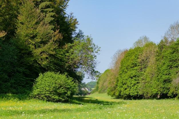 Met gras begroeid terrein met groene bomen onder een blauwe hemel overdag