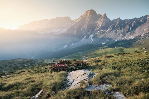 Met gras begroeide heuvels met bloemen en bergen