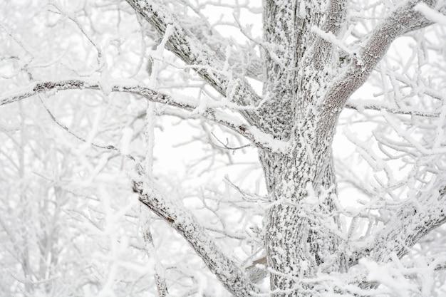 Met het oog op besneeuwde witte boom bedekt met rijm