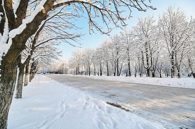 Met sneeuw bedekte bomen langs de ongereinigde stadsstraat