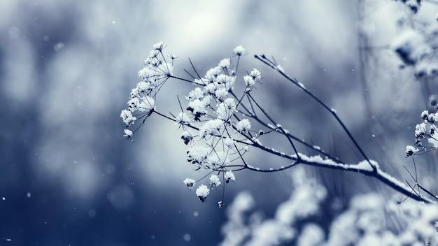 Met sneeuw bedekte droge takken van gras tijdens een sneeuwval