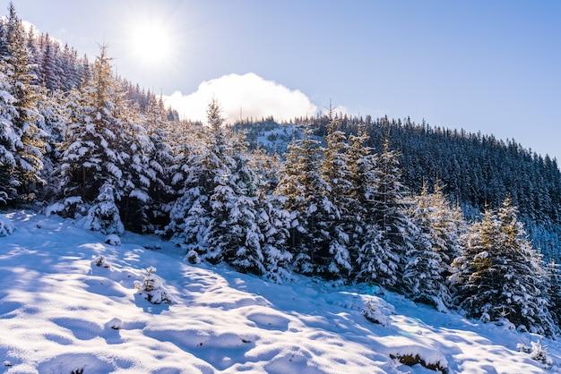 Met sneeuw bedekte karpaten en heuvels met enorme sneeuwbanken van sneeuwwitte sneeuw en groenblijvende kerstbomen verlicht door de felle koude zon