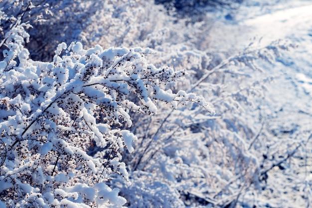 Met sneeuw bedekte struikgewas van planten op een zonnige dag
