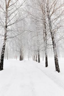 Met sneeuw bedekte weg - de weg die in de winter met sneeuw bedekt is.