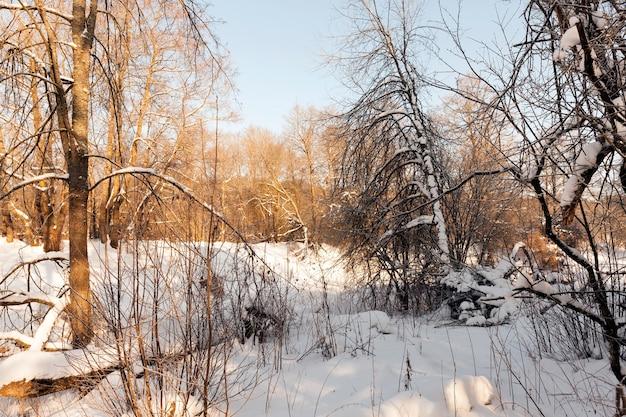 Met sneeuw en ijs bedekte bomen