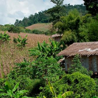 Met stro bedekt dakhuis op een gebied, chiang dao, chiang mai province, thailand