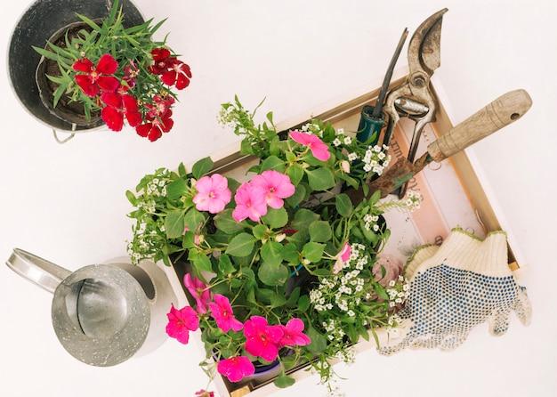 Metaalwaterkruik dichtbij bloemen en tuinmateriaal in doos
