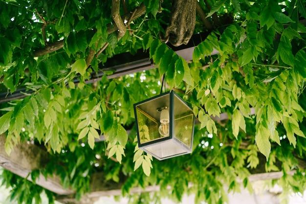 Metalen hangende lantaarn op een metalen boog in groene blauweregen bladeren
