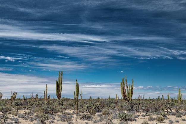 Mexicaanse woestijn met cactussen en vetplanten onder fascinerende hemel in san ignacio, baja california, mexico