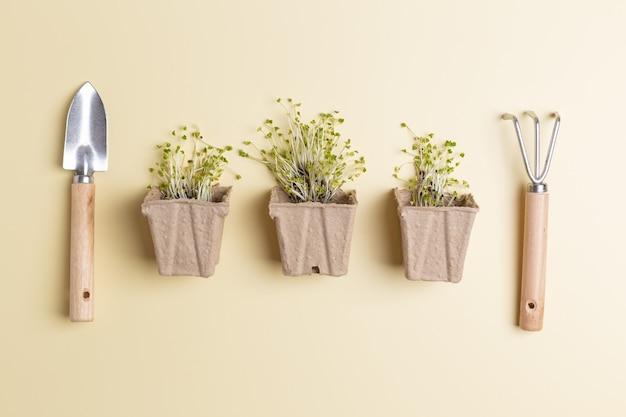Micro greens in kleine potties concept van het planten van kruiden thuis zero waste shop.