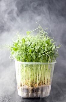 Micro greens op een zwarte achtergrond