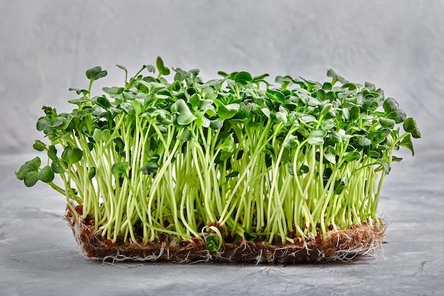 Micro greens, tuinkers rucola een laag van microgreens op een lichte achtergrond close-up, kopieer ruimte