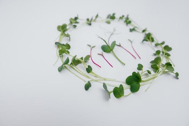 Micro-groene spruiten close-up op een witte achtergrond met vrije ruimte. gezonde voeding en levensstijl.