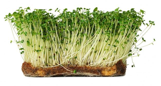 Micro groene spruiten van witte waterkerssalade die op wit wordt geïsoleerd Premium Foto
