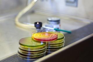 Microbiologie plaat