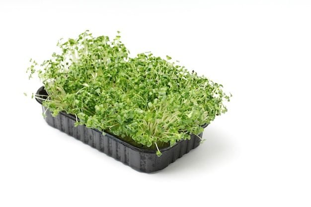 Microgreen in een plastic container op een witte geïsoleerde achtergrond. koolspruiten