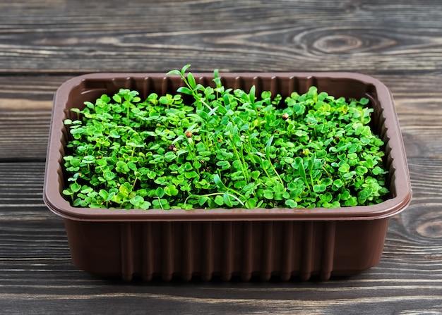 Microgreen kweken in een plastic bak