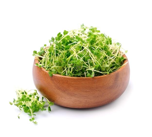 Microgreen rucola ontspruit macro isolatd op witte backrounds.