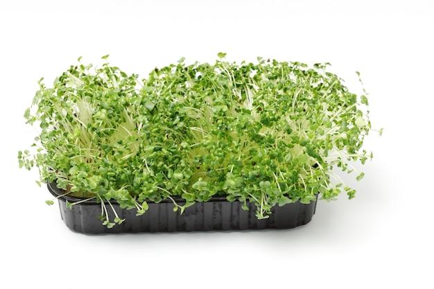 Microgreen spruitenkool op een witte geïsoleerde achtergrond Premium Foto