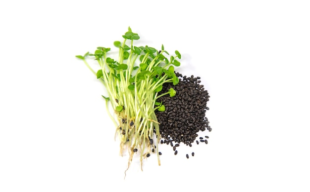 Microgreens basilicum isoleren op een witte achtergrond. selectieve aandacht. eten.