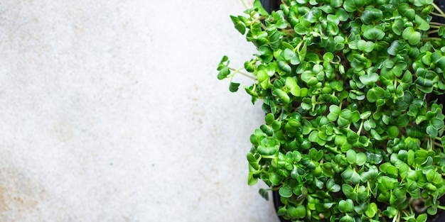 Microgreens container groentesalade rauw eten mosterd kruiden basilicum verse radijs veganistisch