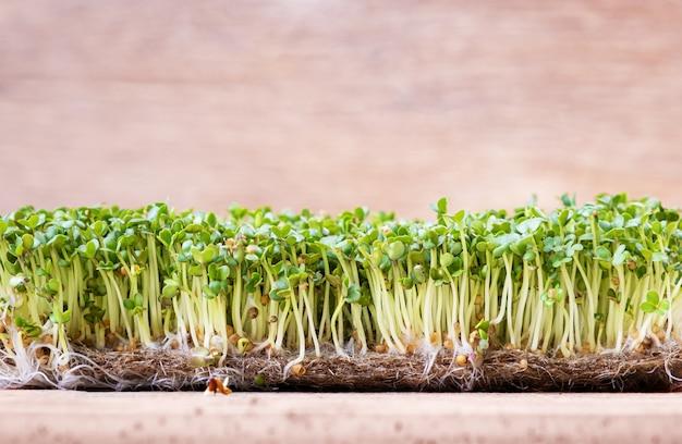 Microgreens. gekiemde mosterdzaad op een tafel. bovenaanzicht.