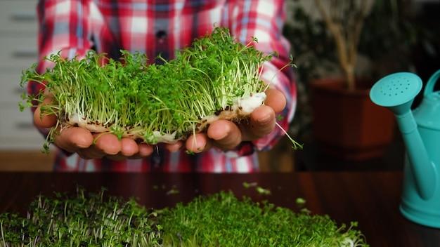Microgreens in de handen van een man. selectieve aandacht. mensen.