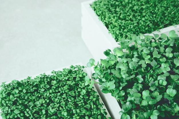 Microgreens in witte houten kisten.