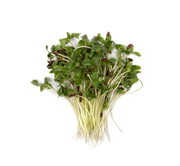 Microgreens linnen groene verse bladeren