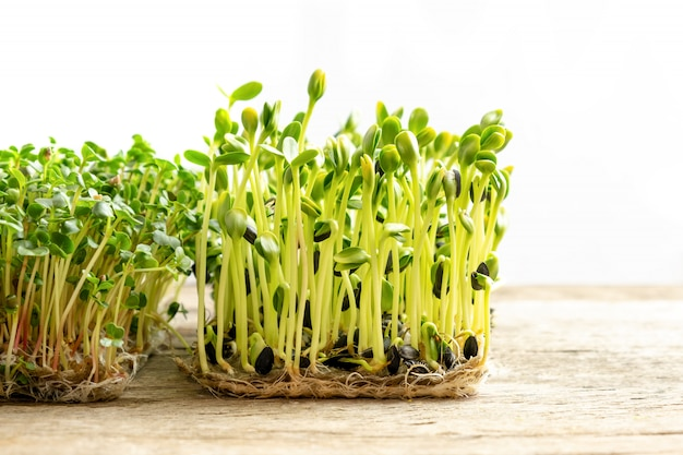 Microgreens. ontkiemde zonnebloempitten, close-up.