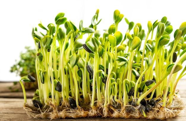 Microgreens. ontkiemde zonnebloempitten, close-up.