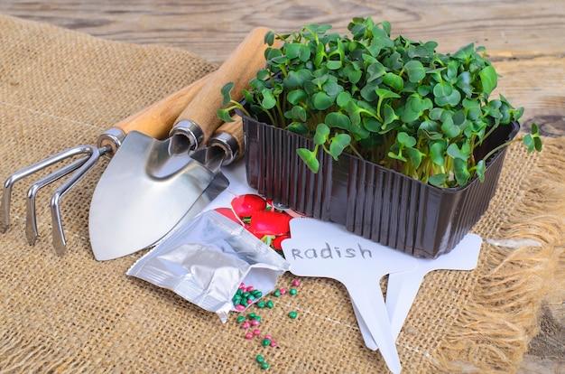Microgreens planten, pak met radijszaden.