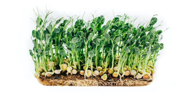 Microgreens spruiten geïsoleerd op wit Premium Foto