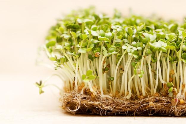 Microgroen. de ontsproten mosterdzaden op linnenmat sluiten omhoog