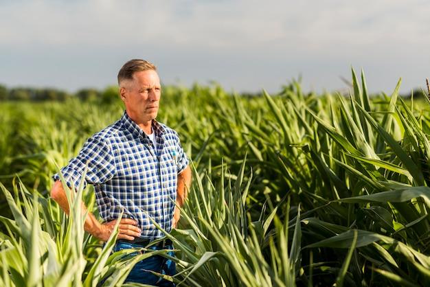 Middelbare leeftijd man inspectie van een maïsveld